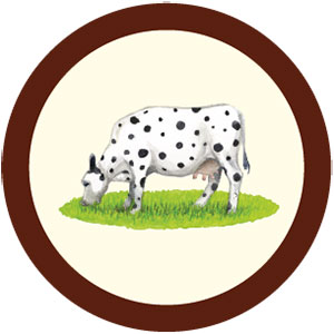 The Spotted Cow Chocolate Chip
